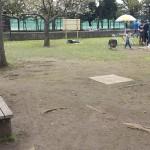 篠崎公園 (8)