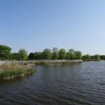 舎人公園 自然池