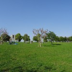 舎人公園 芝生広場