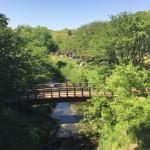 ふれあいの森公園 橋