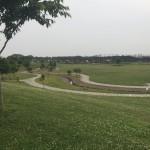 大和ゆとりの森公園 芝生