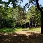 みなとが丘ふ頭公園 キャンプ場