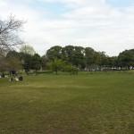 篠崎公園 (23)
