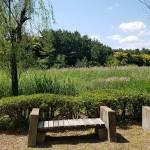 みなとが丘ふ頭公園 自然池