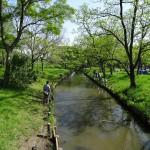 水元公園 水路