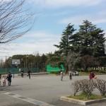 篠崎公園 (19)