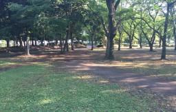 海老名運動公園 自然