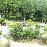 足柄大滝キャンプ場 全体像