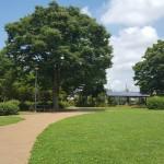 永田公園 自然