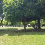 沼辺公園 自然