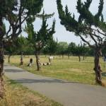 秋ヶ瀬公園 通路
