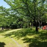 みなとが丘ふ頭公園 芝生