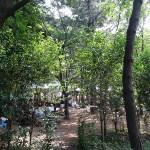 潮風公園 林