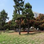 潮風公園 芝生広場