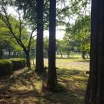 幸手綜合公園 樹木