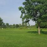 高須賀池公園 芝生