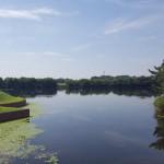羽生水郷公園 水辺