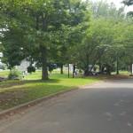 加須はなさき公園 並木
