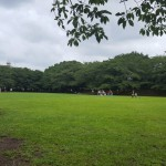 蕨市民公園 芝生