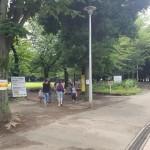蕨市民公園 並木
