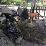 万力公園内 動物広場