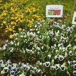 山梨県笛吹川フルーツ公園花の広場