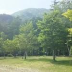 芦沢コテージ場内の自然