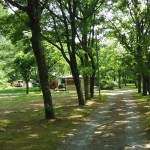 西湖キャンプ場テント村広場