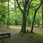 村営山中湖キャンプ場キャンプサイト
